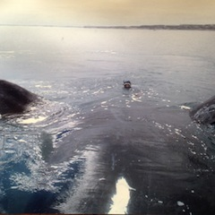 Krov with Right Whale